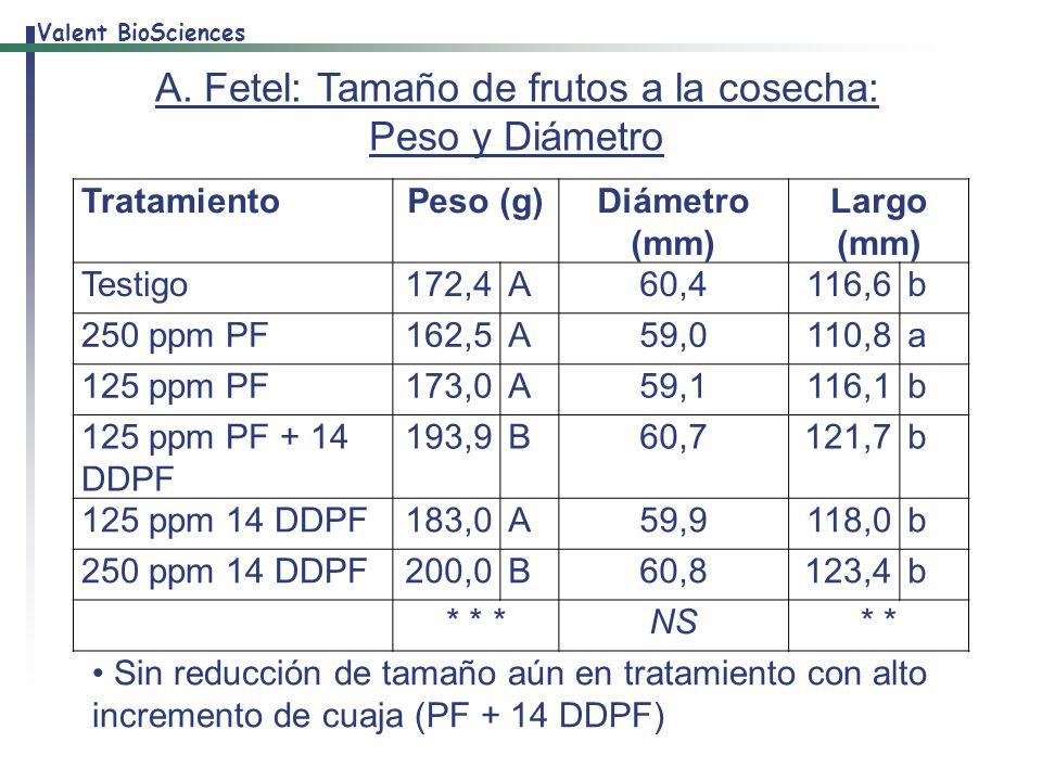 A. Fetel: Tamaño de frutos a la cosecha: Peso y Diámetro