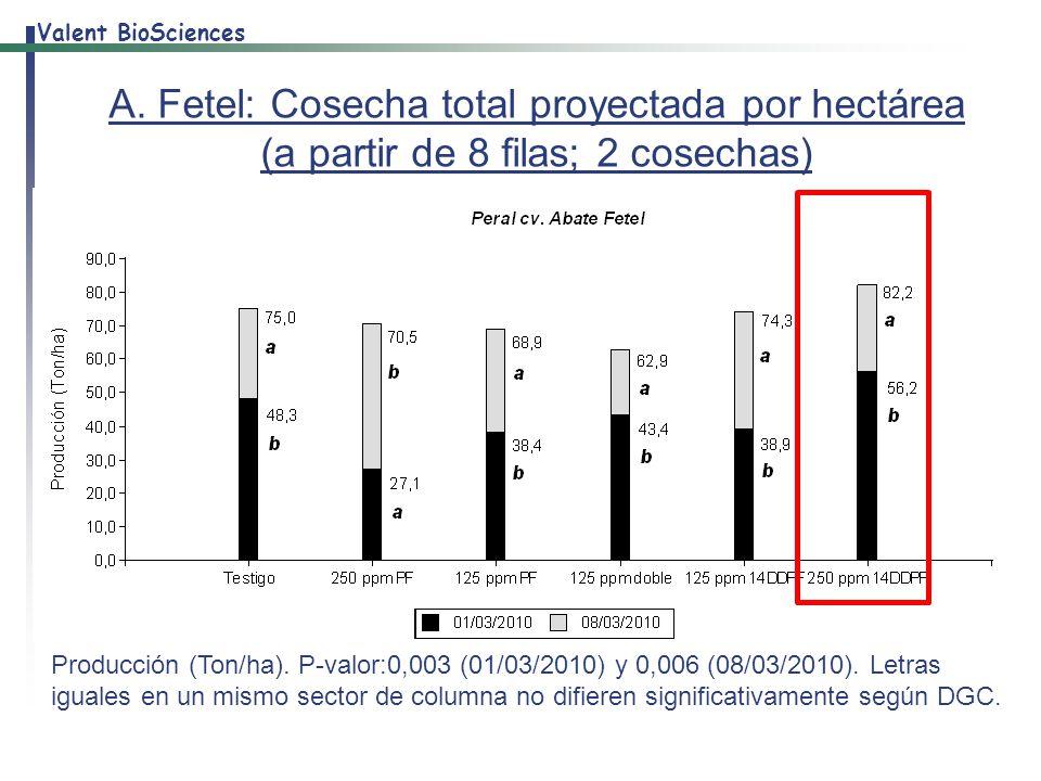 A. Fetel: Cosecha total proyectada por hectárea (a partir de 8 filas; 2 cosechas)