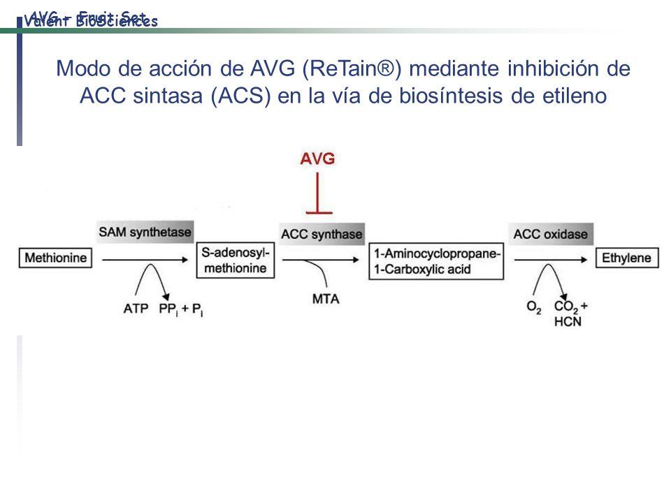 AVG – Fruit Set Modo de acción de AVG (ReTain®) mediante inhibición de ACC sintasa (ACS) en la vía de biosíntesis de etileno.