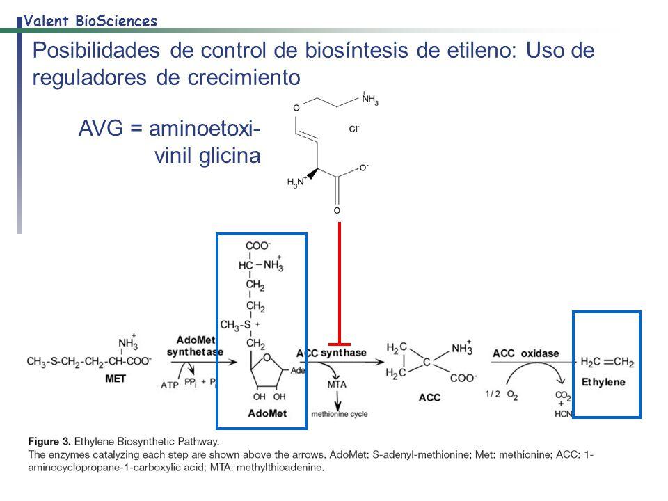 Posibilidades de control de biosíntesis de etileno: Uso de reguladores de crecimiento