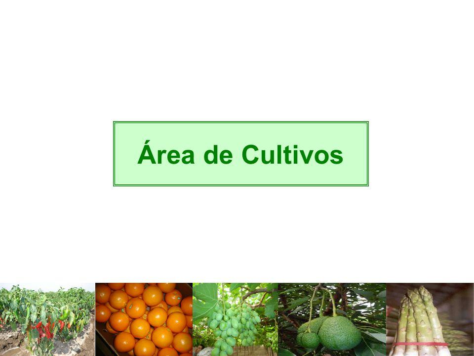 Área de Cultivos