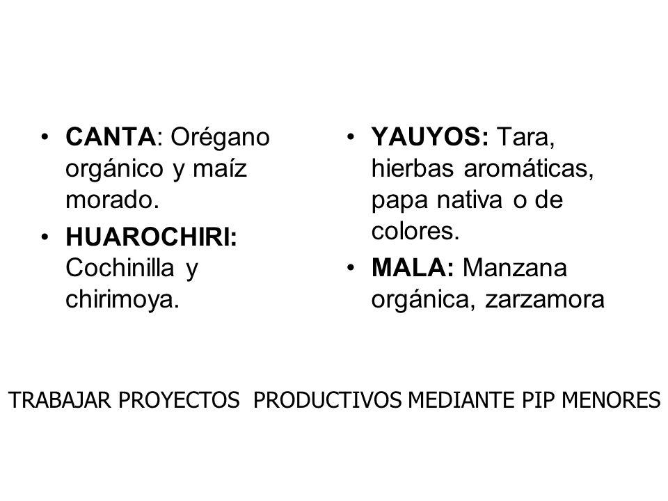 CANTA: Orégano orgánico y maíz morado.