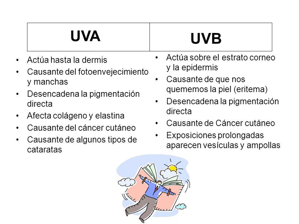 UVA UVB Actúa sobre el estrato corneo y la epidermis