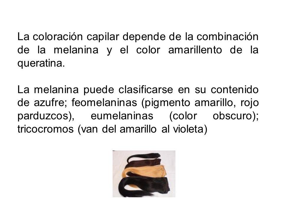 La coloración capilar depende de la combinación de la melanina y el color amarillento de la queratina.