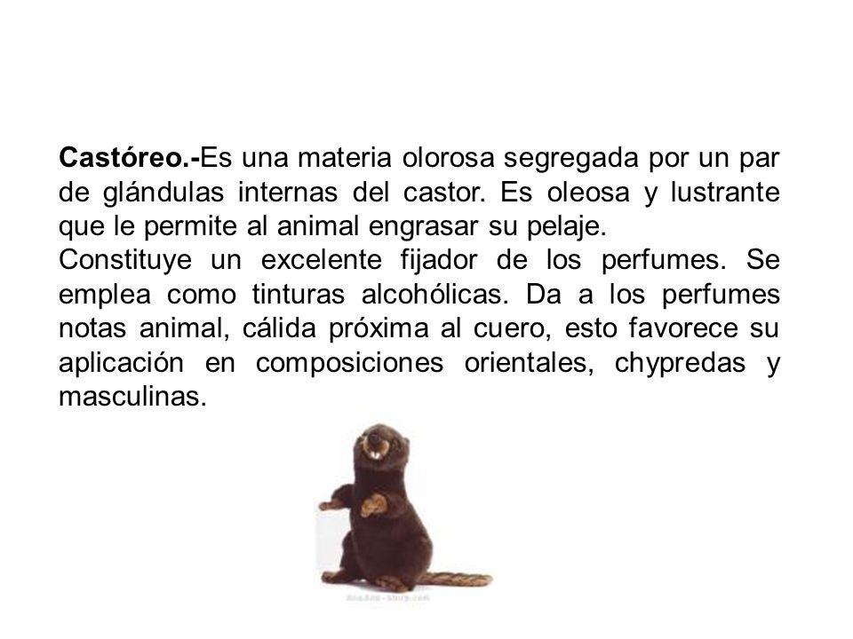 Castóreo.-Es una materia olorosa segregada por un par de glándulas internas del castor. Es oleosa y lustrante que le permite al animal engrasar su pelaje.