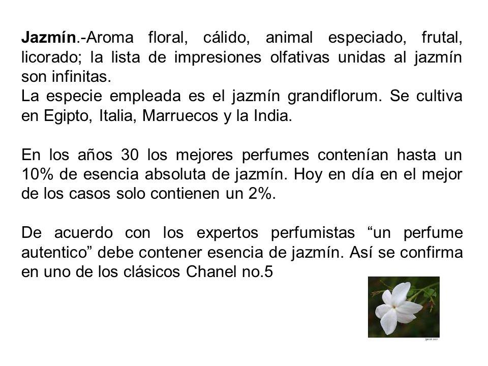 Jazmín.-Aroma floral, cálido, animal especiado, frutal, licorado; la lista de impresiones olfativas unidas al jazmín son infinitas.