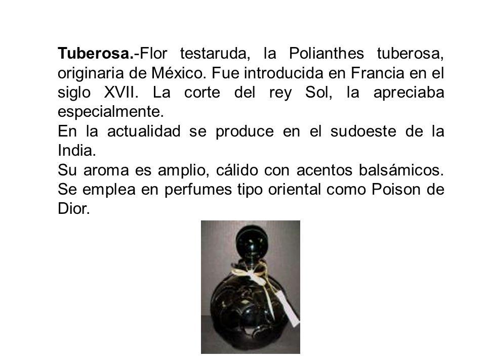 Tuberosa.-Flor testaruda, la Polianthes tuberosa, originaria de México. Fue introducida en Francia en el siglo XVII. La corte del rey Sol, la apreciaba especialmente.