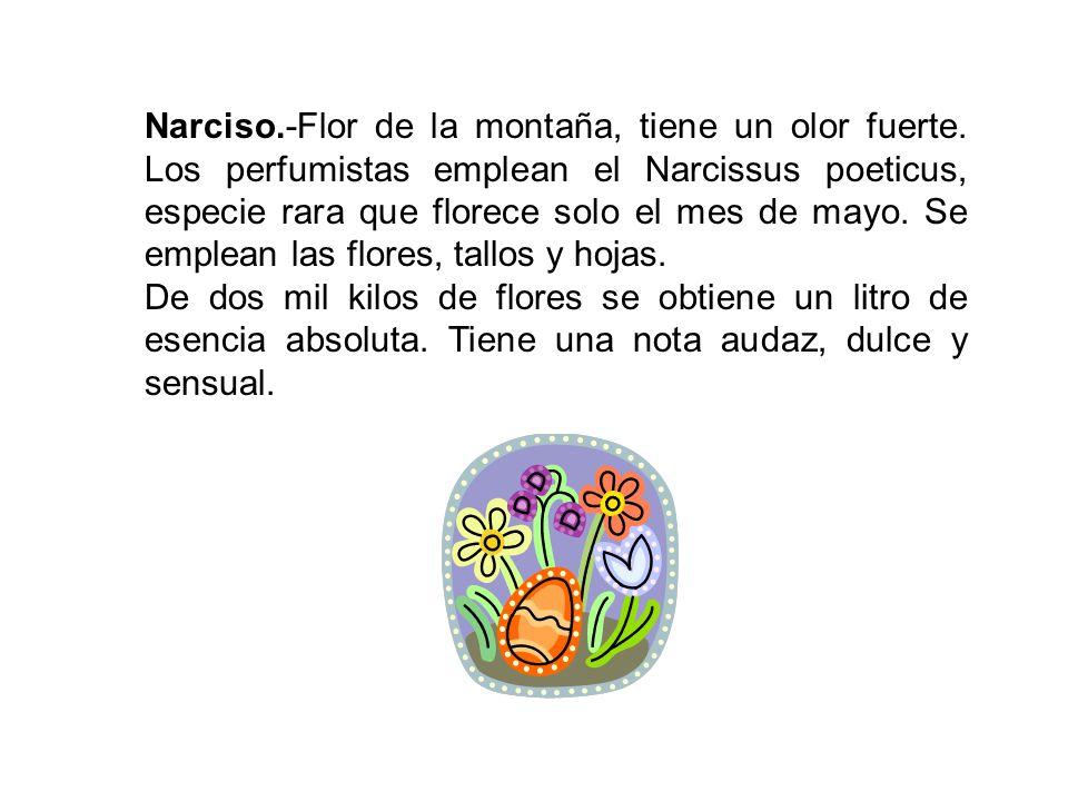 Narciso. -Flor de la montaña, tiene un olor fuerte