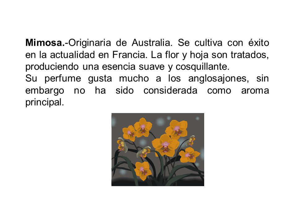 Mimosa. -Originaria de Australia