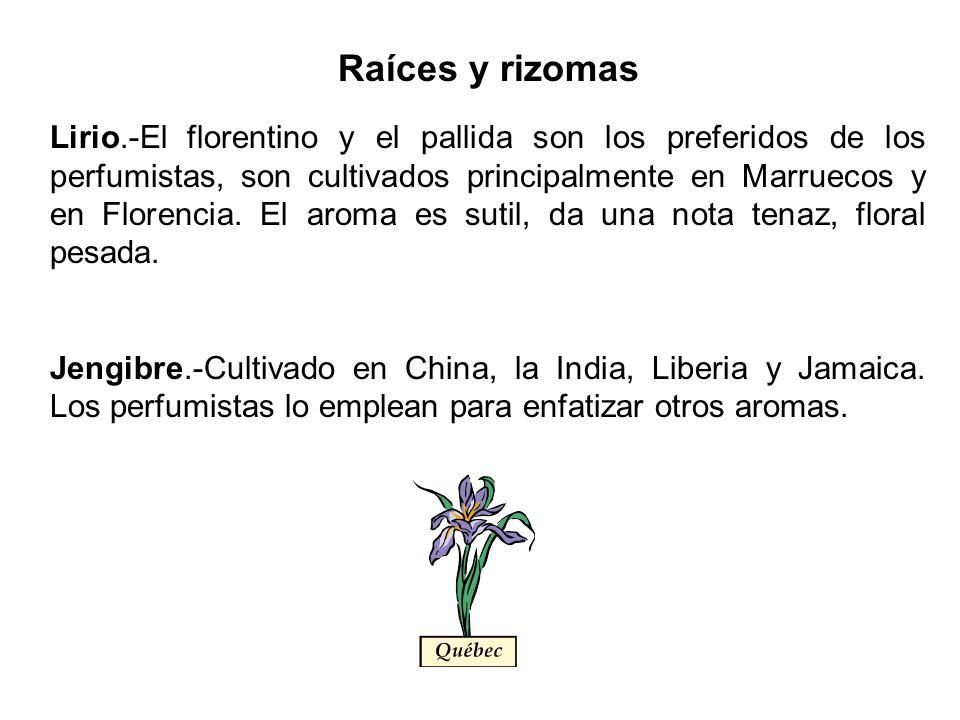 Raíces y rizomas