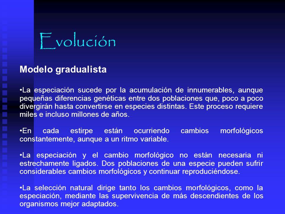 Evolución Modelo gradualista