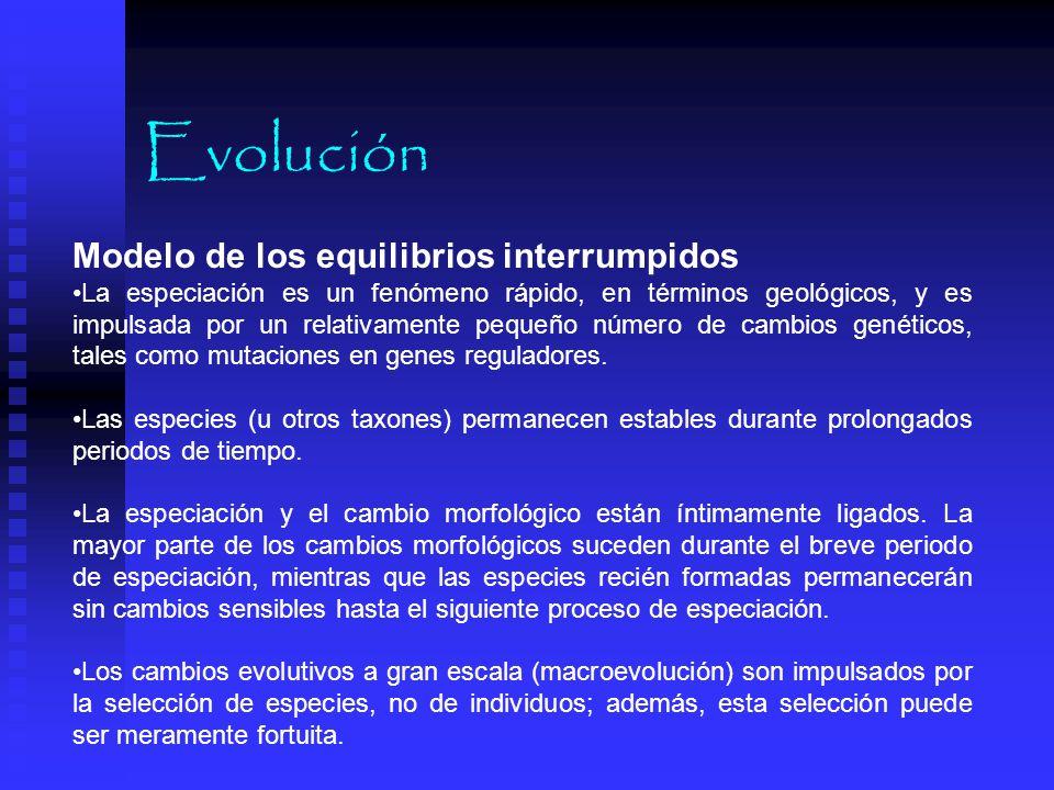Evolución Modelo de los equilibrios interrumpidos
