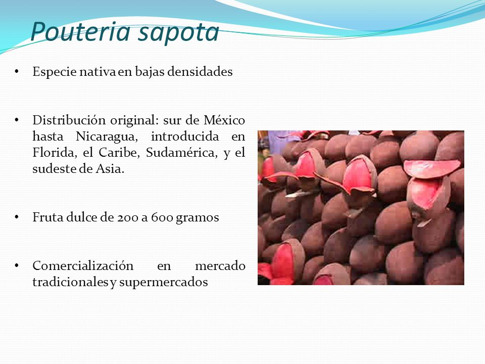 Pouteria sapota Especie nativa en bajas densidades
