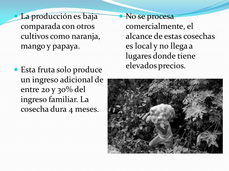 La producción es baja comparada con otros cultivos como naranja, mango y papaya.