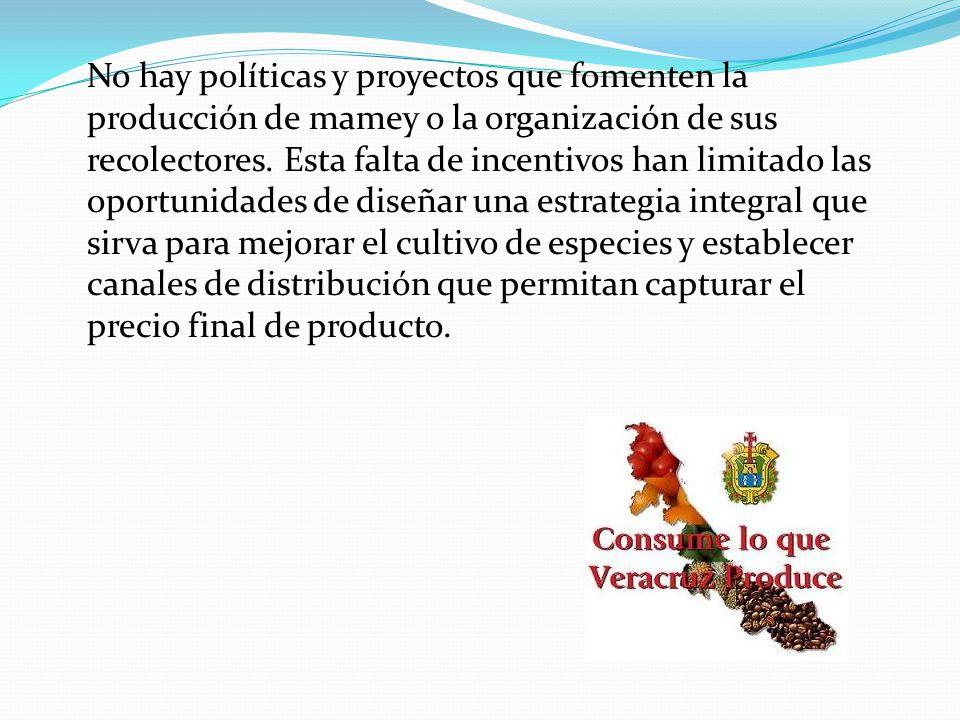 No hay políticas y proyectos que fomenten la producción de mamey o la organización de sus recolectores.