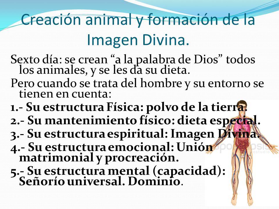 Creación animal y formación de la Imagen Divina.