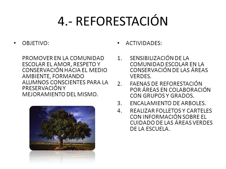 4.- REFORESTACIÓN OBJETIVO: