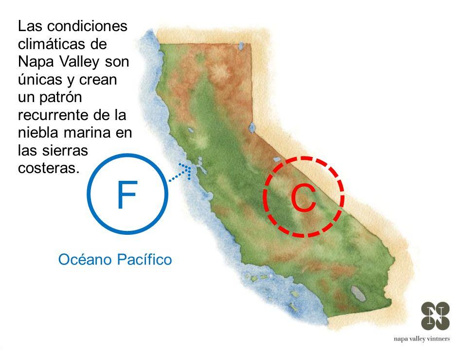Las condiciones climáticas de Napa Valley son únicas y crean un patrón recurrente de la niebla marina en las sierras costeras.