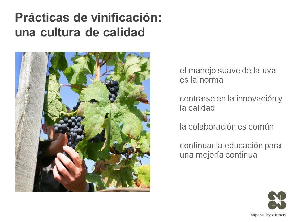 Prácticas de vinificación: una cultura de calidad