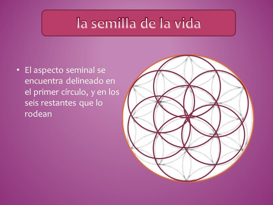 la semilla de la vida El aspecto seminal se encuentra delineado en el primer círculo, y en los seis restantes que lo rodean.