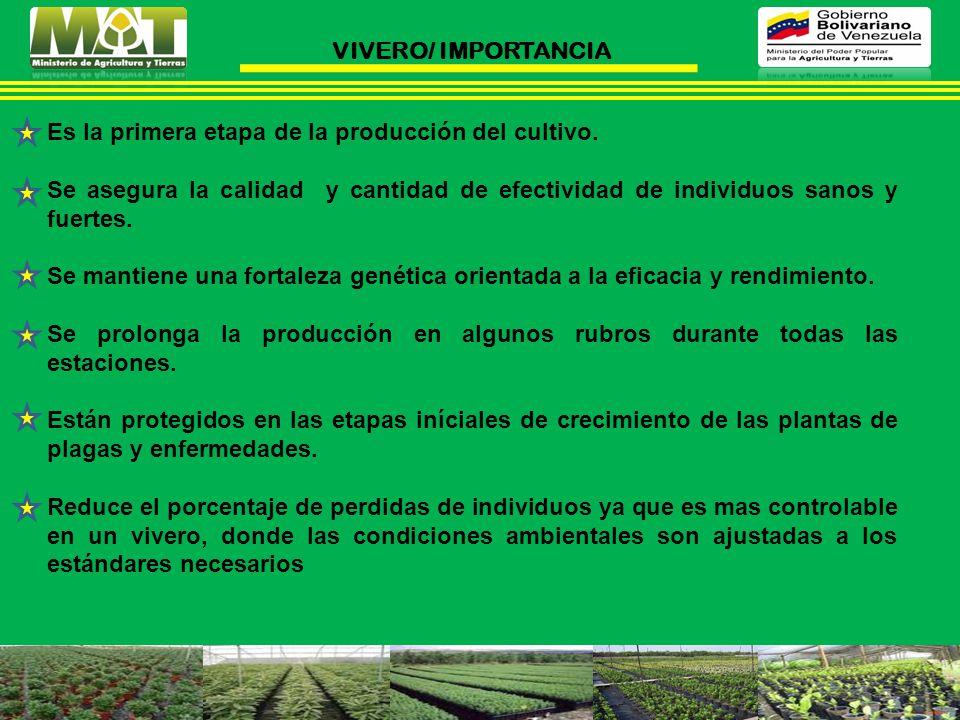 VIVERO/ IMPORTANCIA Es la primera etapa de la producción del cultivo.