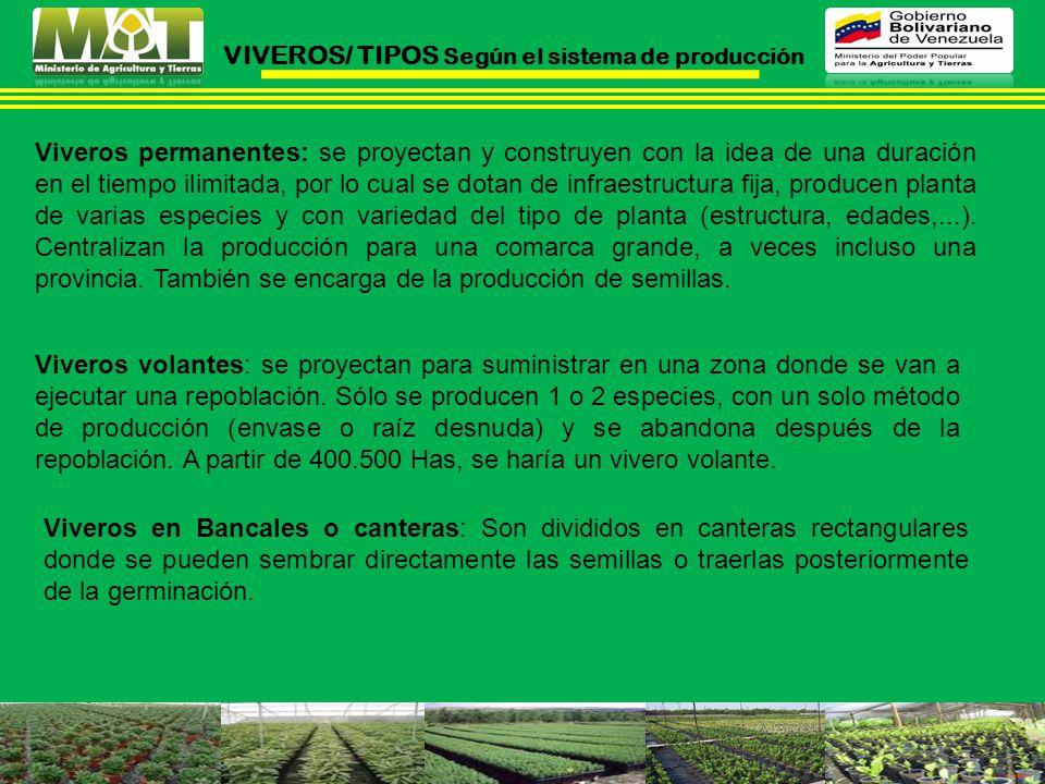 VIVEROS/ TIPOS Según el sistema de producción