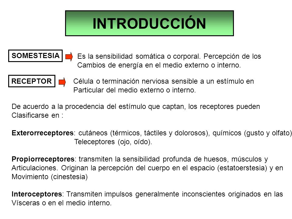 INTRODUCCIÓN SOMESTESIA