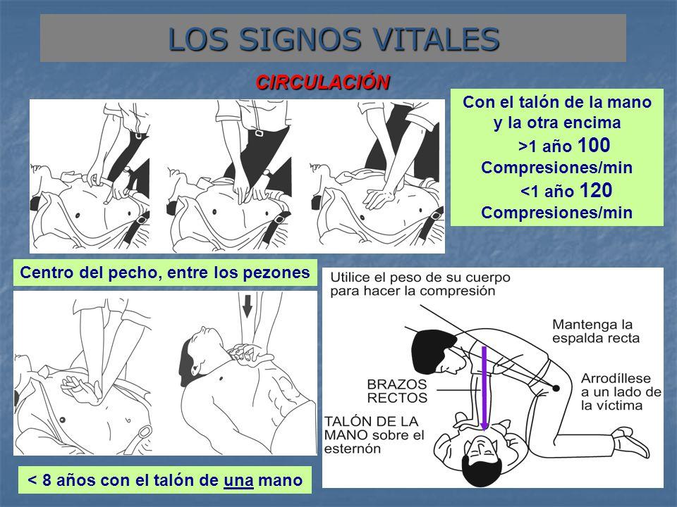 LOS SIGNOS VITALES CIRCULACIÓN