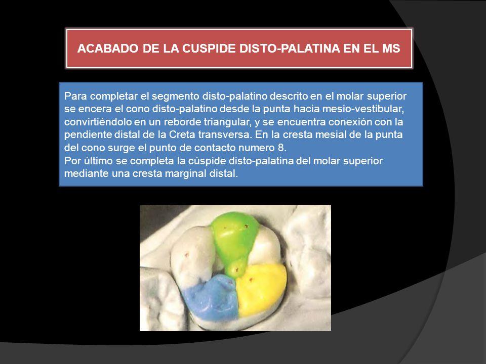 ACABADO DE LA CUSPIDE DISTO-PALATINA EN EL MS