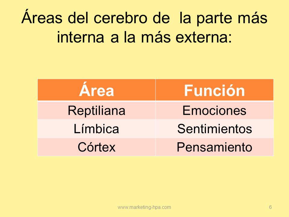Áreas del cerebro de la parte más interna a la más externa: