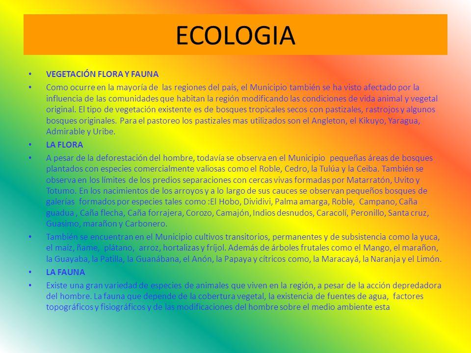 ECOLOGIA VEGETACIÓN FLORA Y FAUNA