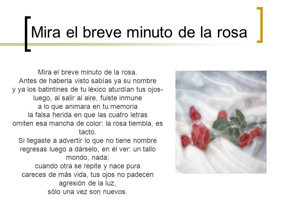 Mira el breve minuto de la rosa