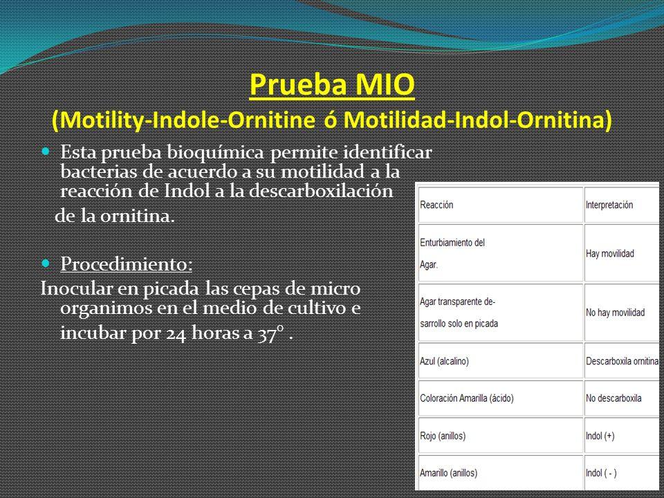 Prueba MIO (Motility-Indole-Ornitine ó Motilidad-Indol-Ornitina)