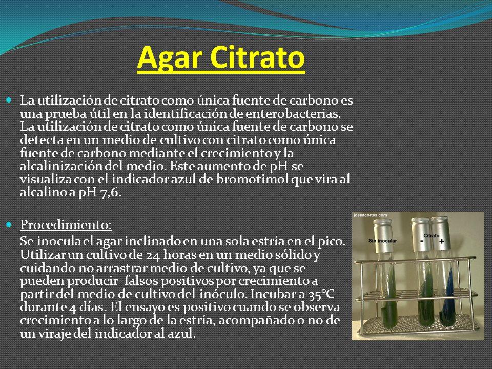 Agar Citrato
