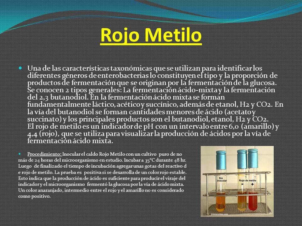 Rojo Metilo