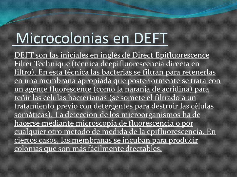 Microcolonias en DEFT
