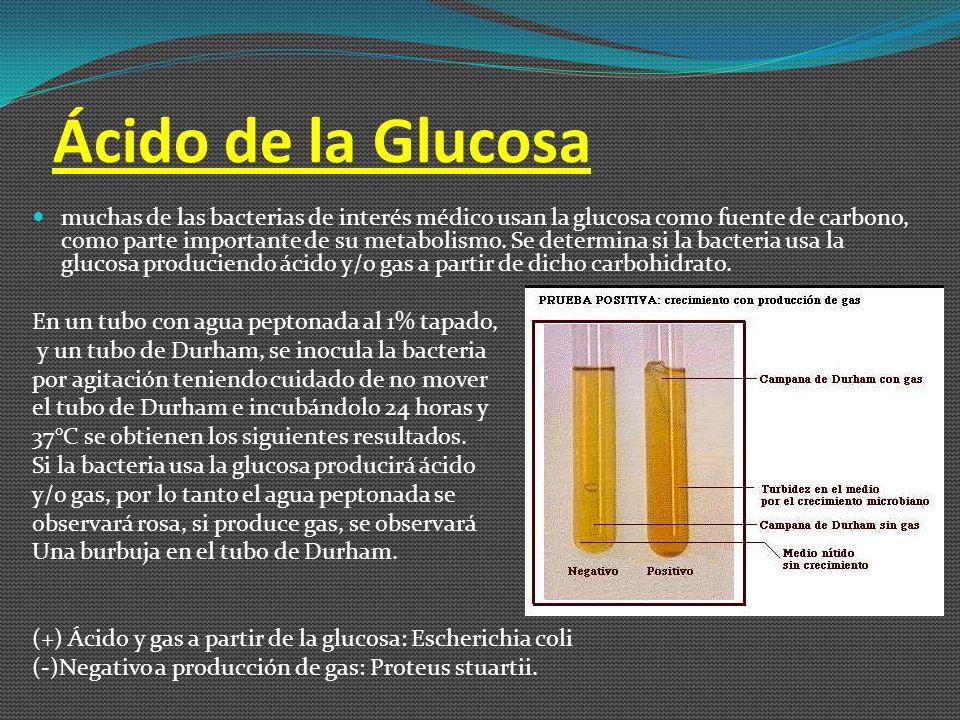 Ácido de la Glucosa
