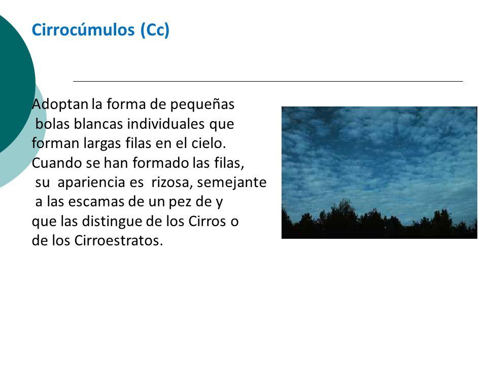 Cirrocúmulos (Cc) Adoptan la forma de pequeñas