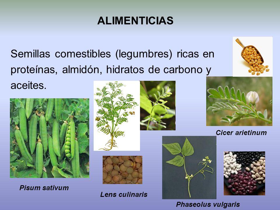 Semillas comestibles (legumbres) ricas en