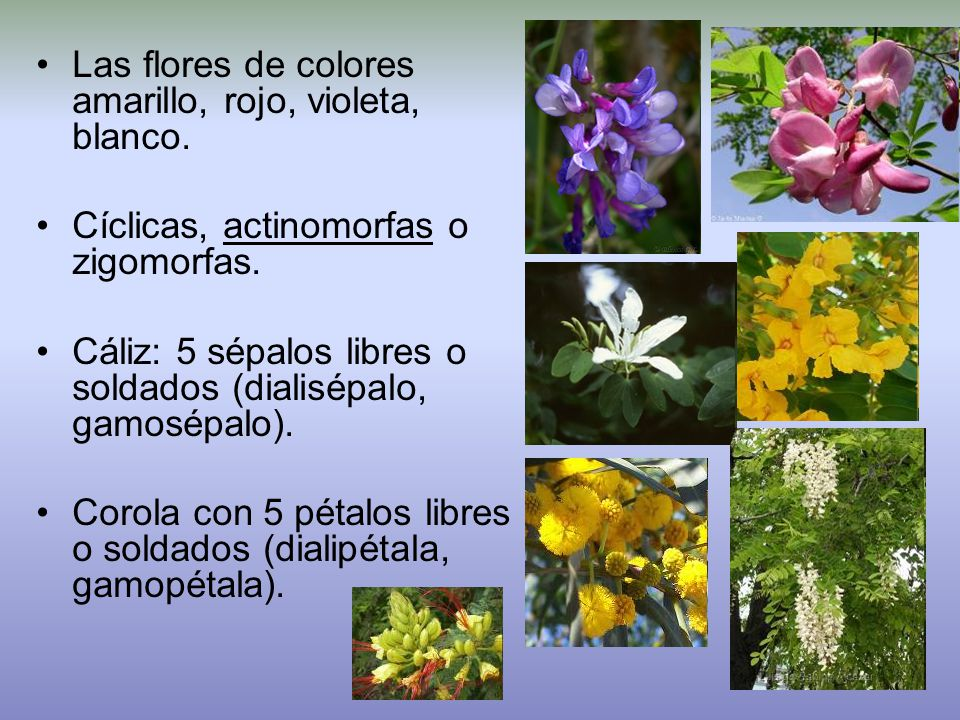Las flores de colores amarillo, rojo, violeta, blanco.