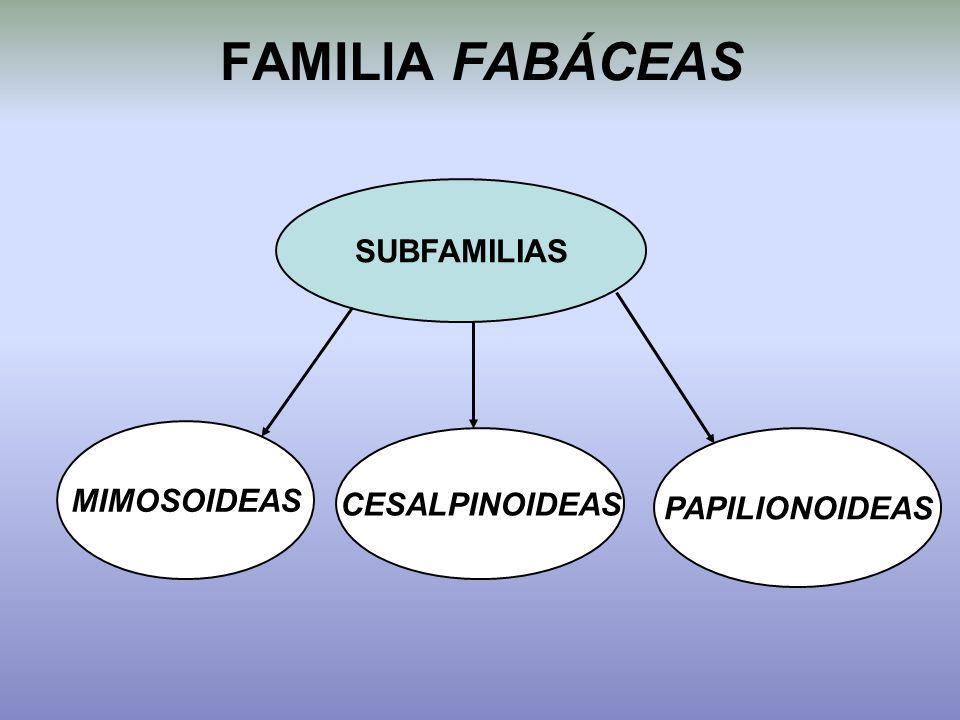 FAMILIA FABÁCEAS SUBFAMILIAS MIMOSOIDEAS CESALPINOIDEAS PAPILIONOIDEAS