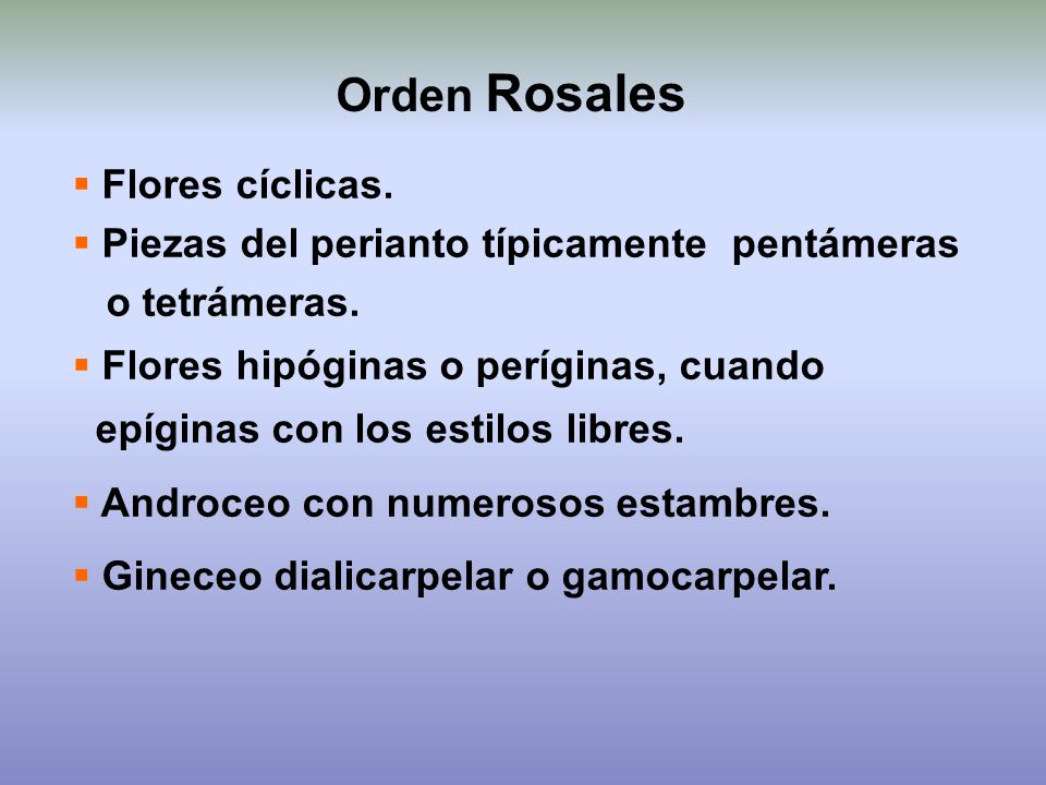 Orden Rosales Flores cíclicas.