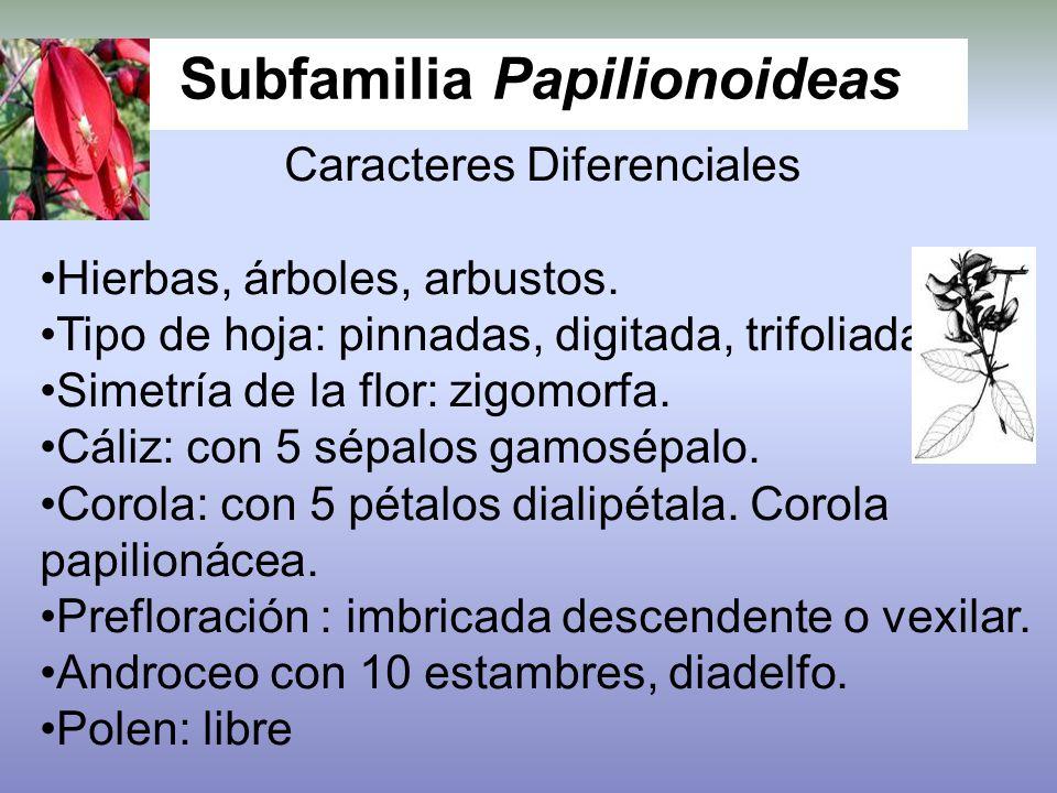 Subfamilia Papilionoideas