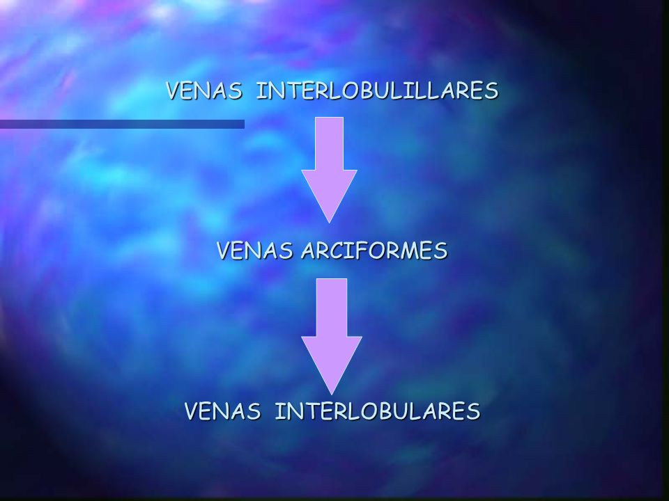 VENAS INTERLOBULILLARES