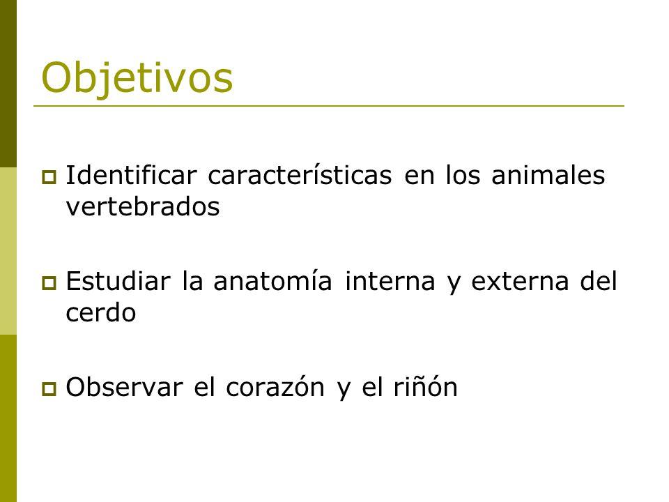Objetivos Identificar características en los animales vertebrados