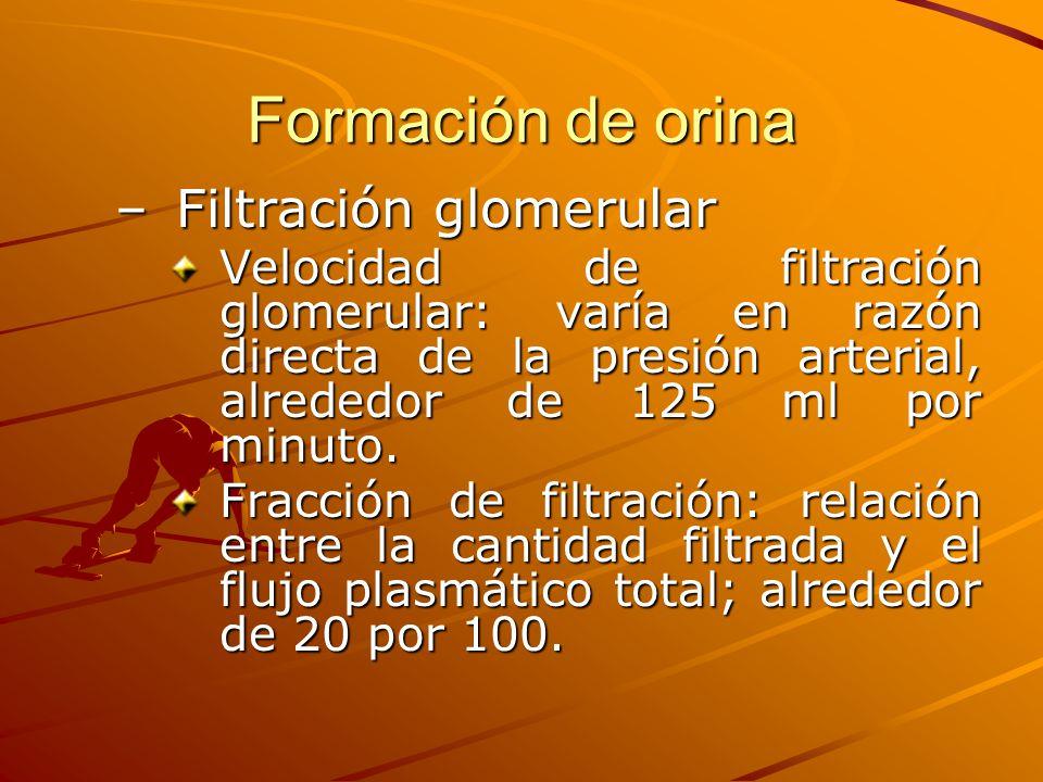 Formación de orina Filtración glomerular