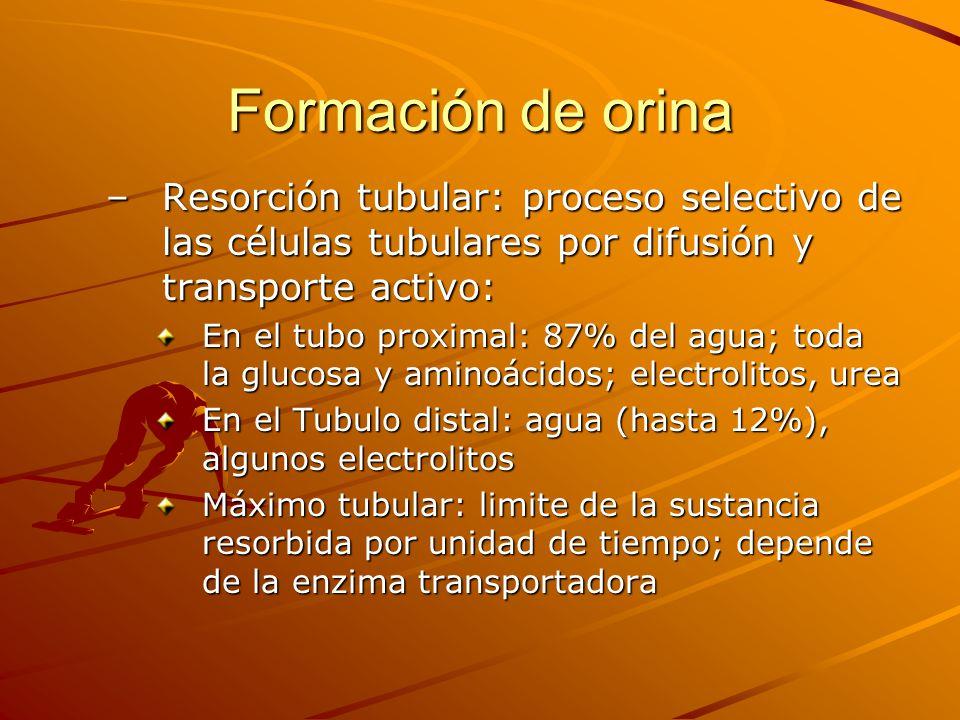 Formación de orina Resorción tubular: proceso selectivo de las células tubulares por difusión y transporte activo: