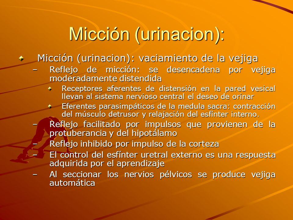 Micción (urinacion): Micción (urinacion): vaciamiento de la vejiga