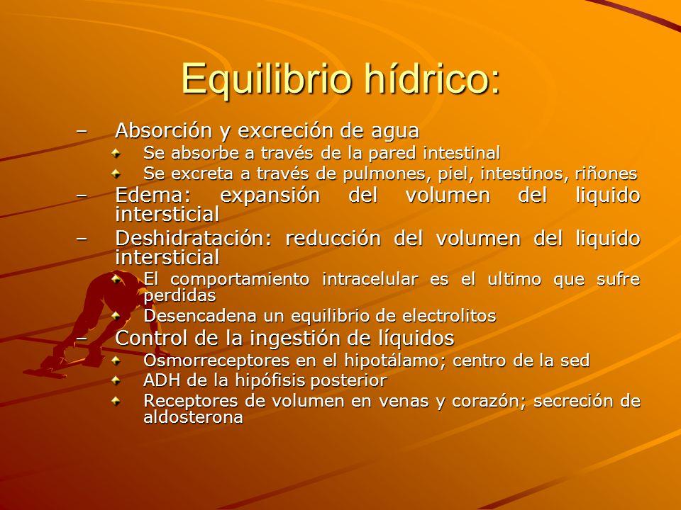 Equilibrio hídrico: Absorción y excreción de agua