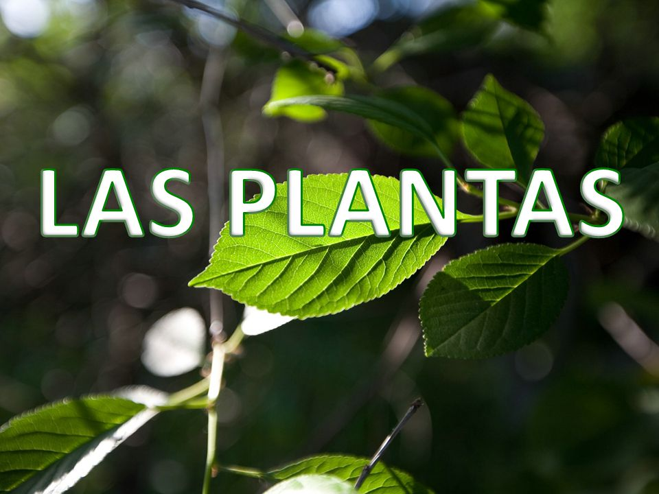 Las plantas ppt video online descargar for Clasificacion de las plantas ornamentales
